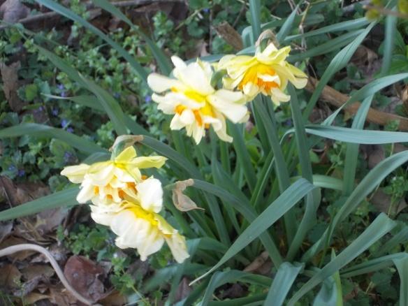 Spring 2014 004
